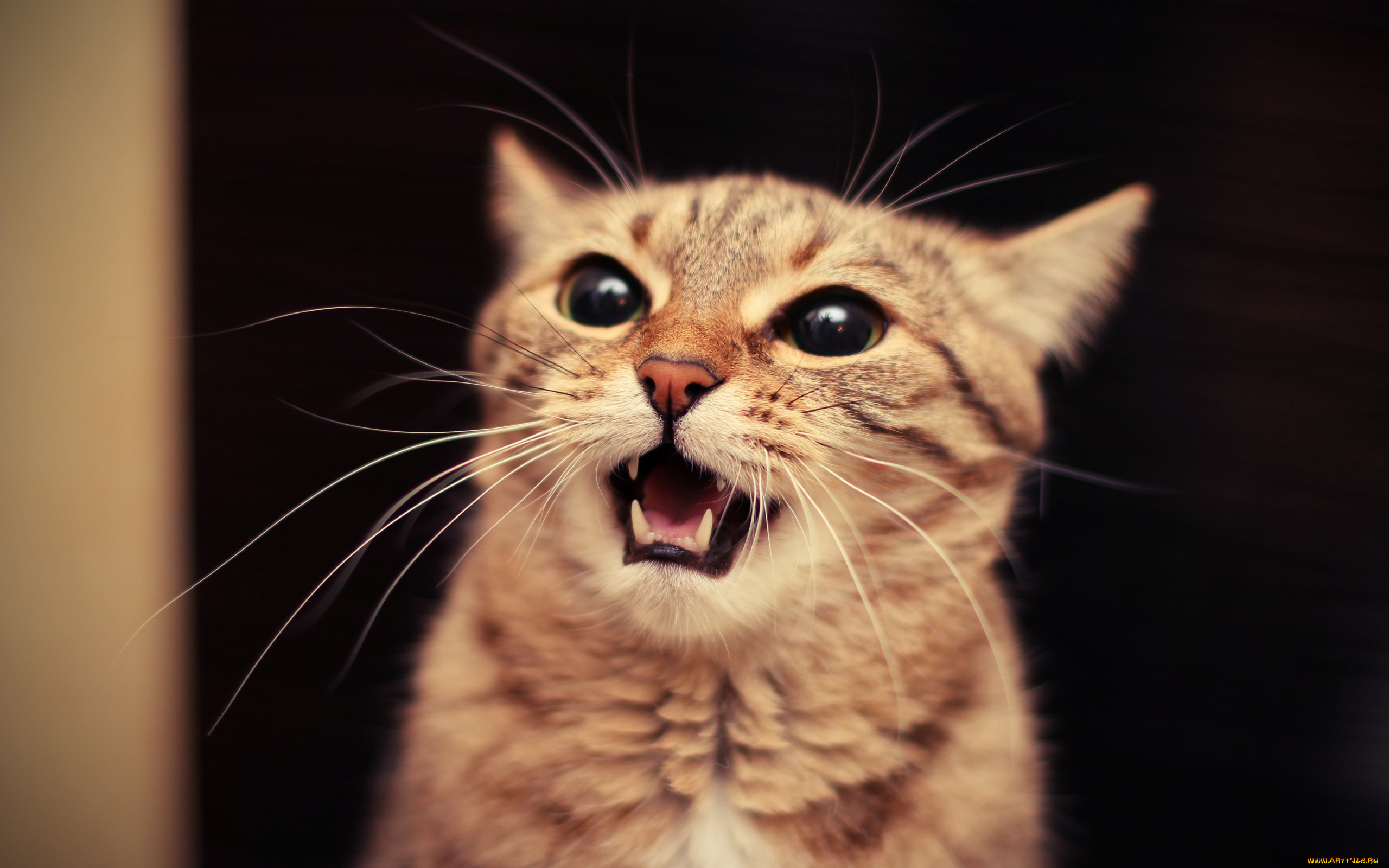 словарике картинки с говорящими котами самом деле это